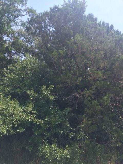 15210 Sutton Drive, Austin, TX 78748