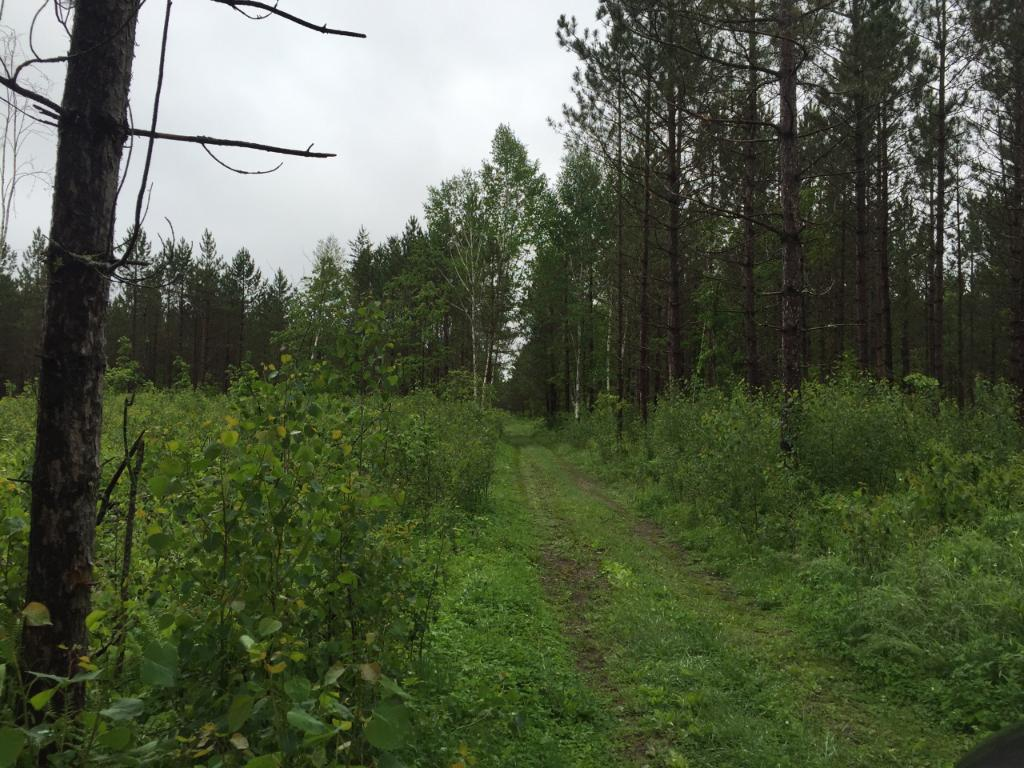 NESW Forest Road 3845 NE, Moose Lake Twp, MN 56663