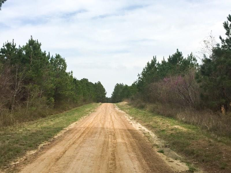 Wilderness Road, Point Blank, TX 77364