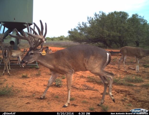 , Big Wells, TX 78830