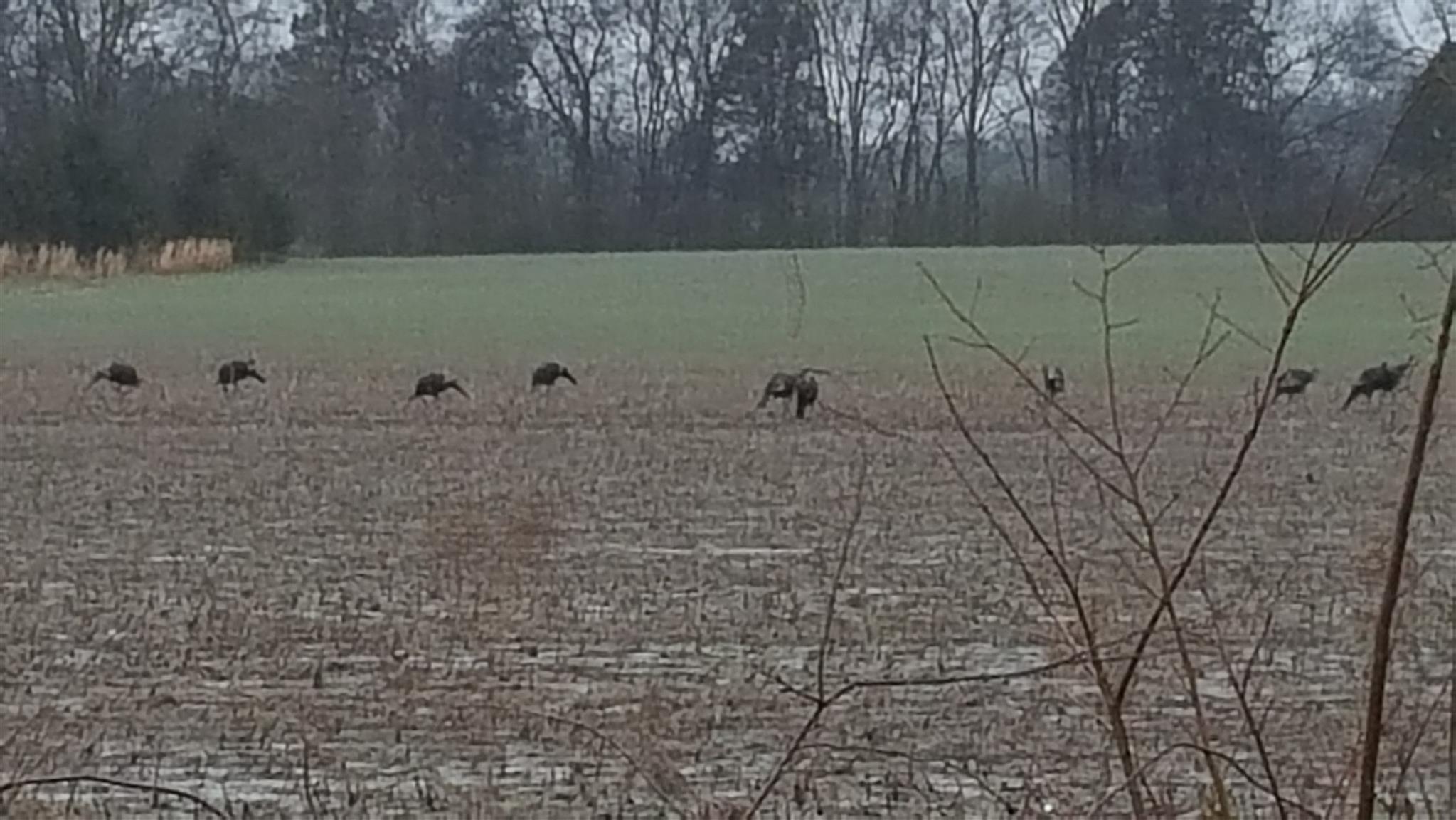 3245 Veals Rd., Murfreesboro, TN 37127