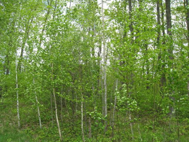 N2202 Two Bear Road, Rusk Twp, WI 54895