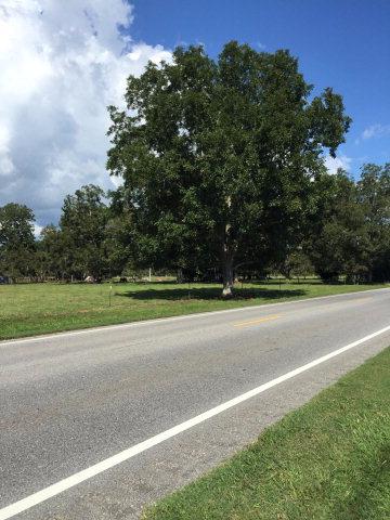 US Highway 98, Elberta, AL 36530