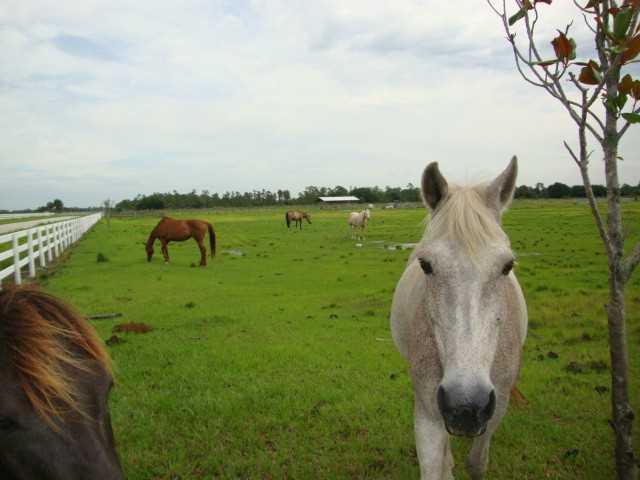 6050 SW Wilderness Way, Palm City, FL 34990