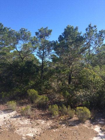 Oak Drive, Orange Beach, AL 36561