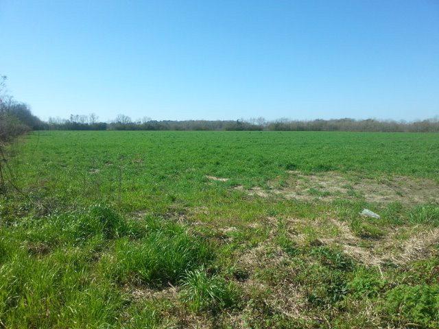 17324 S County Road 12, Foley, AL 36535