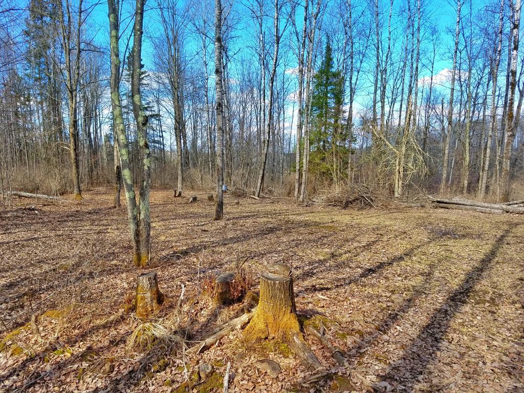 xxx Scout Trail, Ojibwa, WI 54862