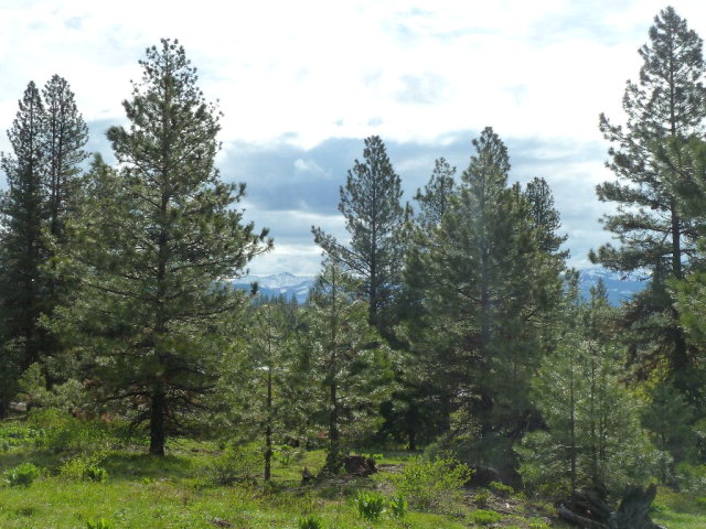 4305 Song Sparrow Drive, McCall, ID 83638