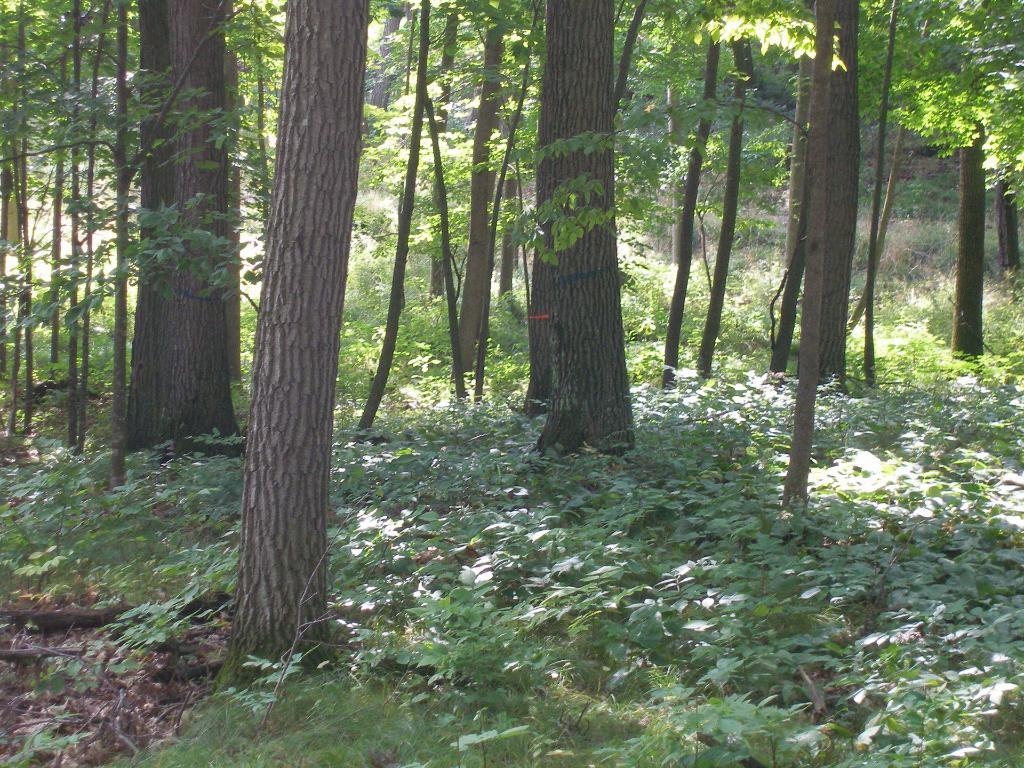 0 Lot 6 Sunset Pines Dr, Sarona, WI 54870