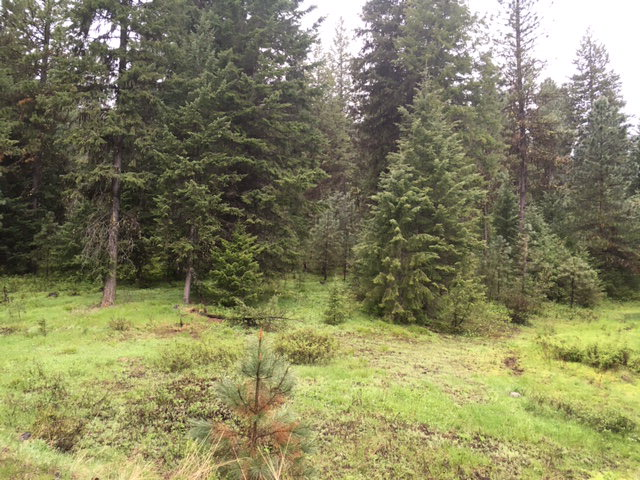 Lot 10 Little Salmon Road, New Meadows, ID 83654