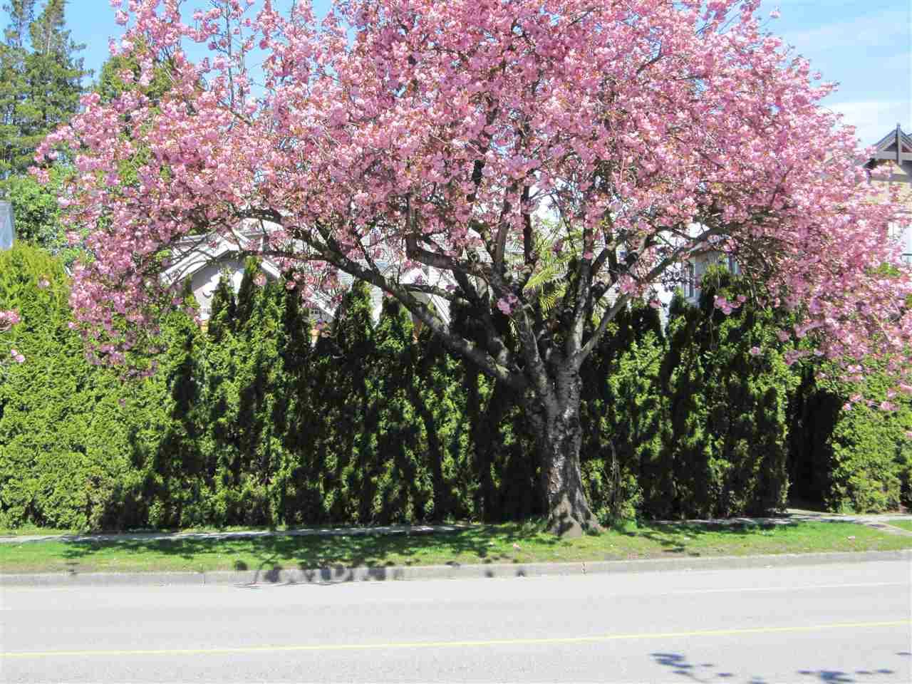 55 W KING EDWARD AVENUE, Vancouver, BC V5Y 2H6