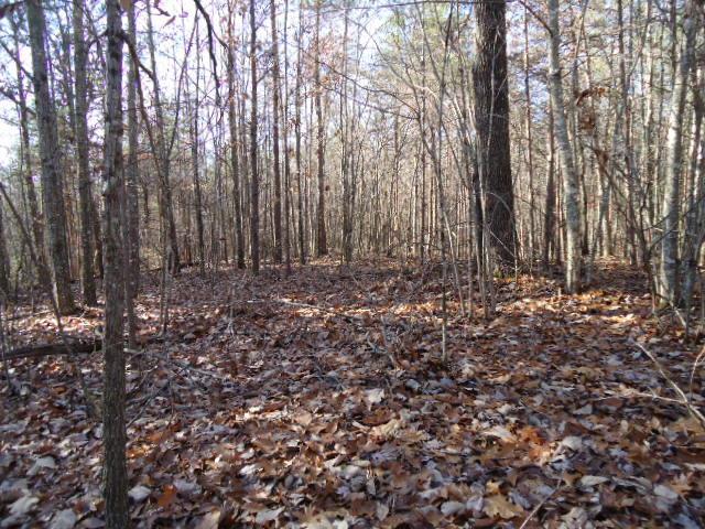 14 .40 Ac. Deep Branch Ln., Wilder, TN 38589