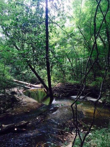 000 Murray Road, McCall Creek, MS 39647