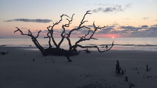1175 N Beachview DR 353, Jekyll Island, GA 31527