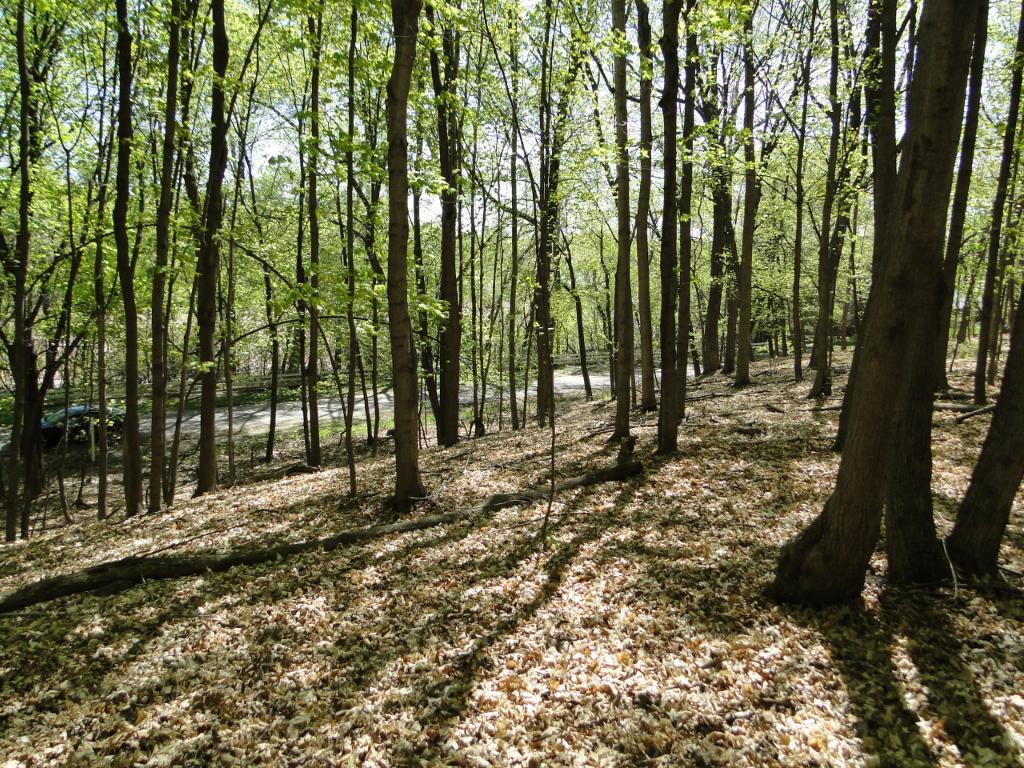 1035 Wildhurst Trail, Orono, MN 55364