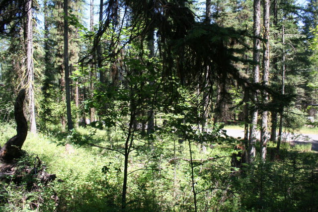 Lot 4 Forest Street, McCall, ID 83638
