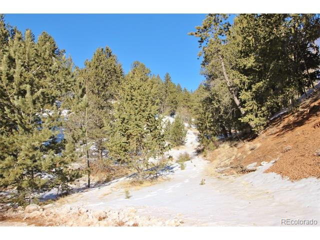 529 Grosbeak Circle, Divide, CO 80814