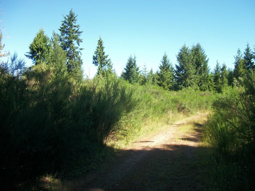 Log Yard Road, Belfair, WA 98528