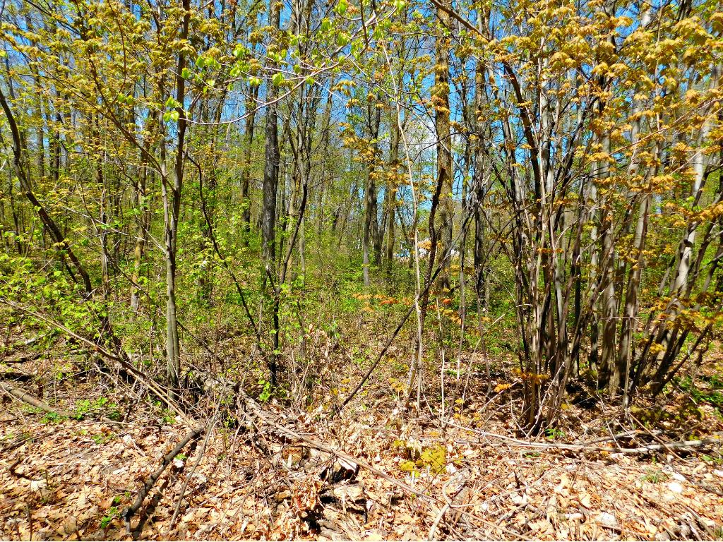 XXX Norway Trail, Randall, MN 56475