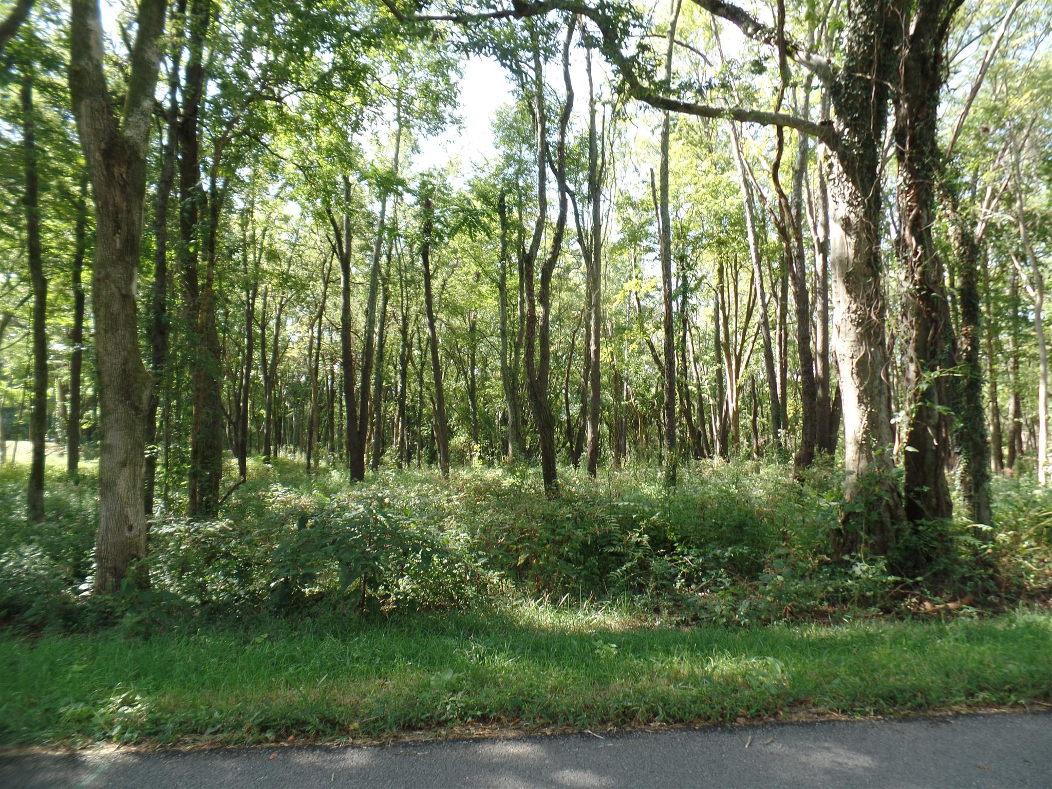 0 Sharp Springs Rd Lot 3, Winchester, TN 37398