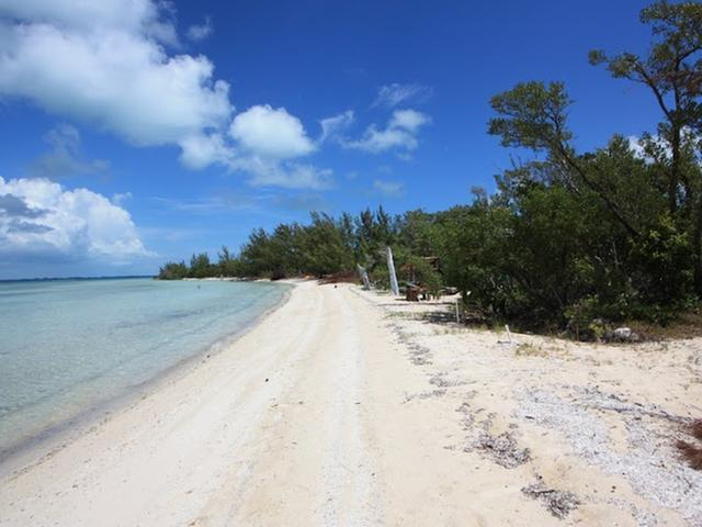 TREE TOP LUBBERS, Abaco,  00008