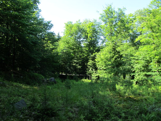 Petrie Rd, Old Forge, NY 13420