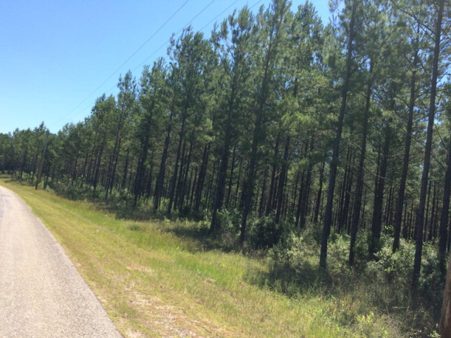0000 Mill Creek Road, Poplarville, MS 39470