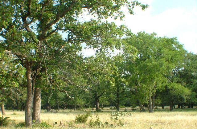 109 County Road 116, Burnet, TX 78611
