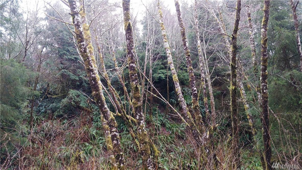 Canyon Wy, Taholah, WA 98587