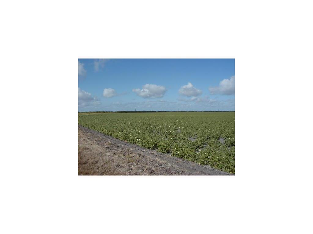 (BACK ACREAGE) Holly Road, Corpus Christi, TX 78417