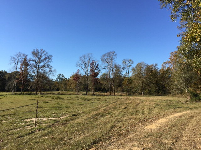 00 HIGHWAY 24/WHITES SCHOOL RD, Centreville, MS 39631