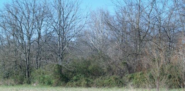 0 Main St, Spring Hill, TN 37174