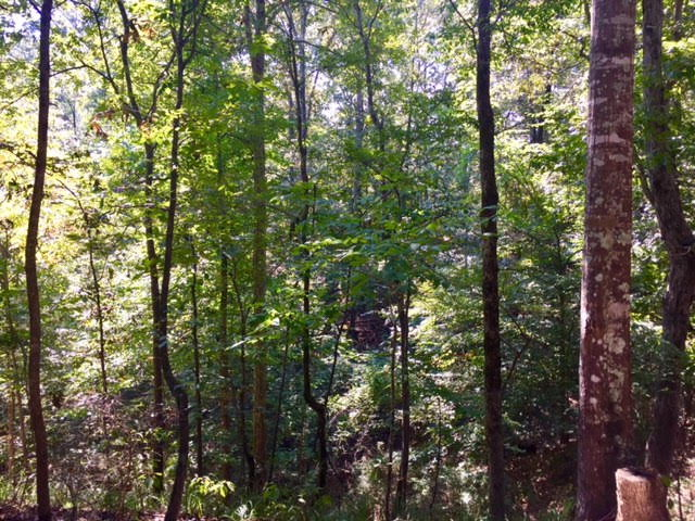 00 COLD SPRINGS ROAD, Woodville, MS 39120