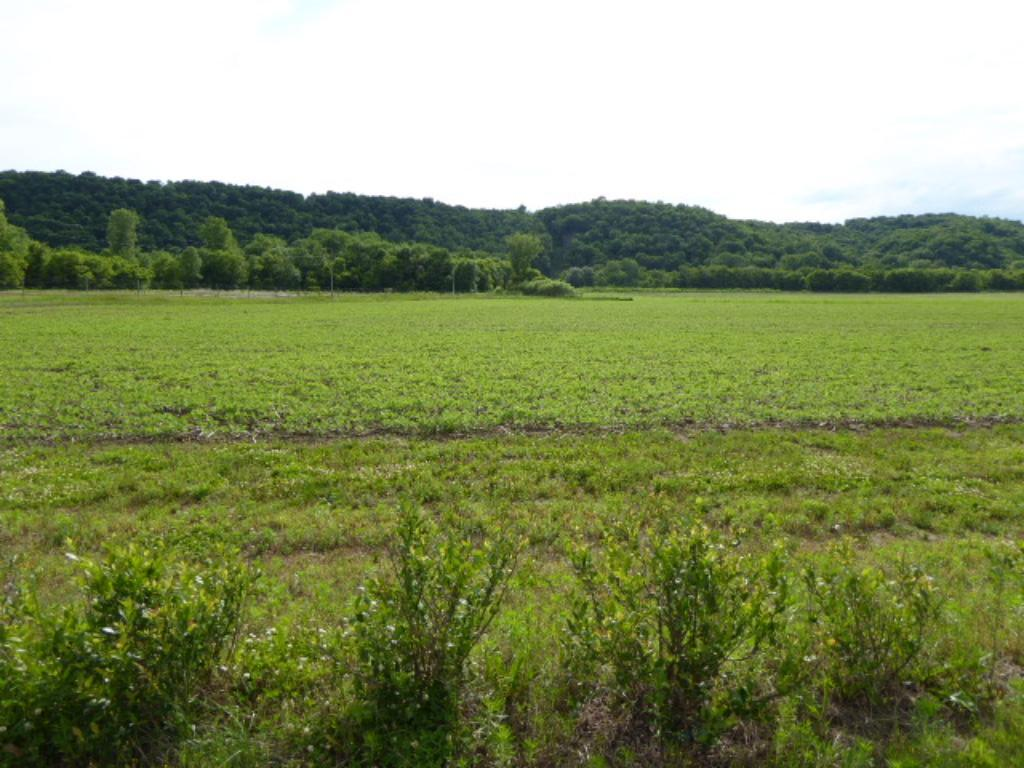 XXX 40 Acres 385th Street, Maiden Rock, WI 54750