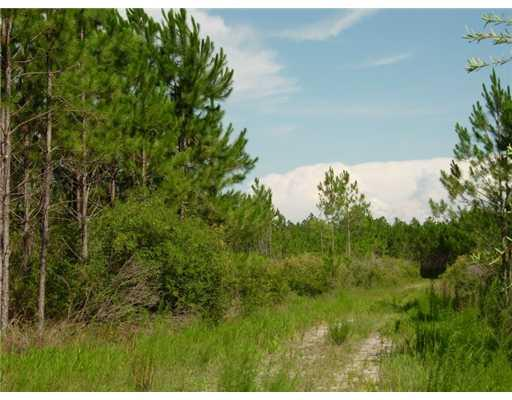 Madison Mainline ROAD, Perry, FL 32347